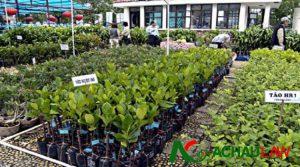 Thông tư 16/2013/TT-BNNPTNT hướng dẫn về bảo hộ quyền đối với giống cây trồng